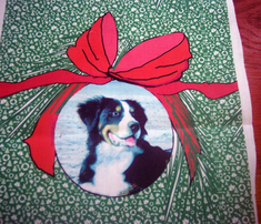Rbernese_mountain_dog_christmas2_comment_316093_thumb