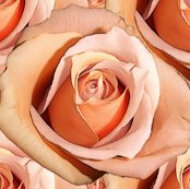 R1784989_rlady_hamilton_roses_bright_shop_thumb