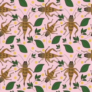 click-it-cricket pink