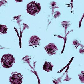 Roses - 2