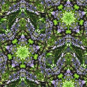 lupine_crop-1_k6
