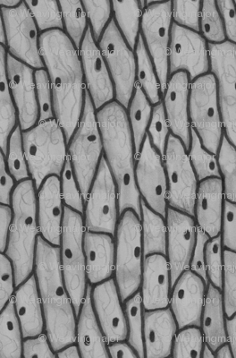 onion cells in black and white