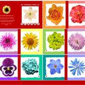 My-chewable-book-of-flowers-2015_shop_thumb