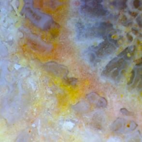 Coral Sun (L)