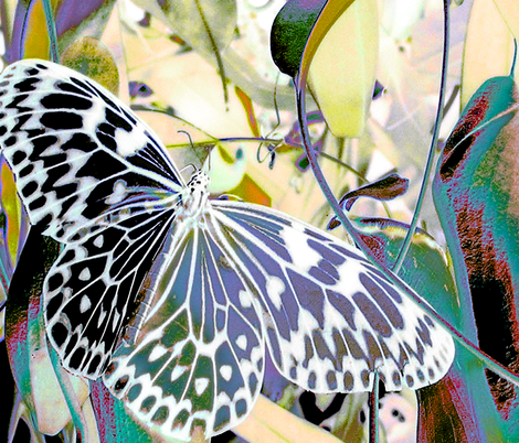 Butterfly Scarf fabric by koalalady on Spoonflower - custom fabric