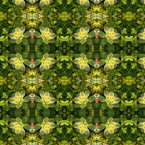 Green Succulents 5772