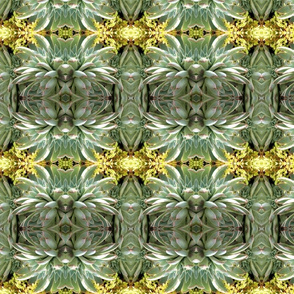 Green Succulents 5774