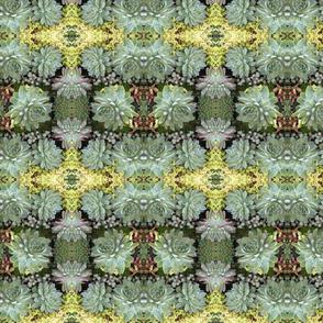 Sage Succulents 5647-2