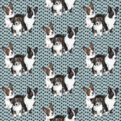 cardigan welsh corgi family