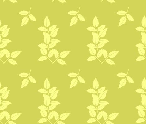 delphinium leaves large