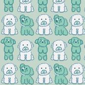Bichon Babies