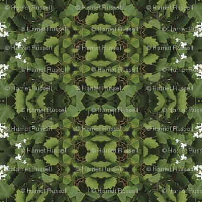 Cornell_Plantation_Gardens_044