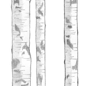 Birches 5