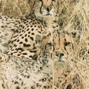cheetahs_in_the_grass