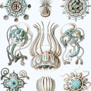 Vintage Sea Creatures, Crisp White and Aqua