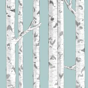 Birches 4