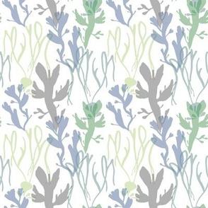 welsh seaweed_3