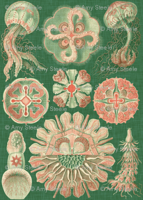 Sea Creatures in Coral