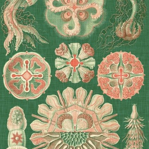 Sea Creatures in Coral