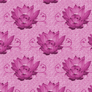Waterlily4