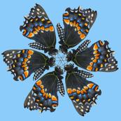 butterflypinwheels
