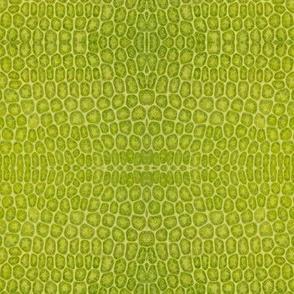 Moss leaf...