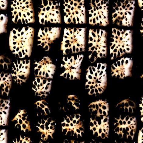 alligator_fossil