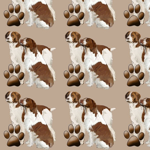 brittany_spaniels_liver_color