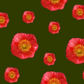 Poppy_for_fashion2