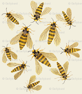 hornet moths natural