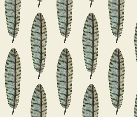 feathers natural fabric by gollybard on Spoonflower - custom fabric