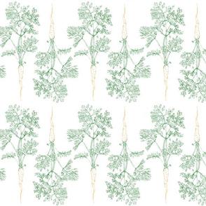 Garden Carrot Outlines