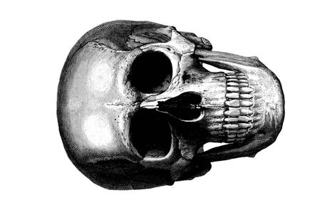 skull32x46