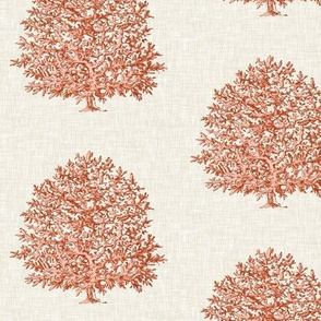 Coral on Linen