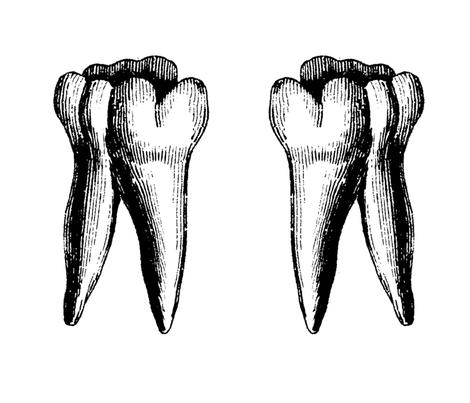 two_big_teeth