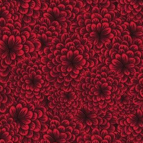 Black Cherry Chrysanthemum