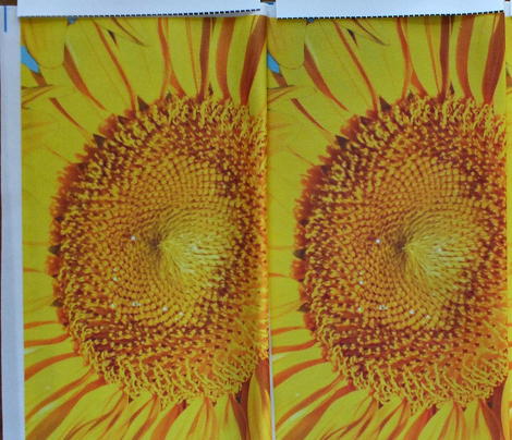 Sunflowers_multiple_on_blue_yard_comment_376535_preview
