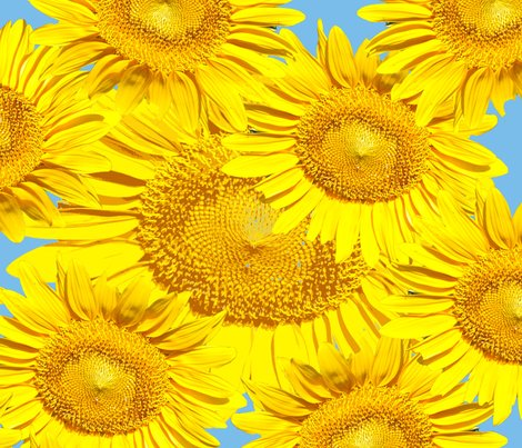 Sunflowers_multiple_on_blue_yard_shop_preview