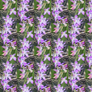 OrchidHeart