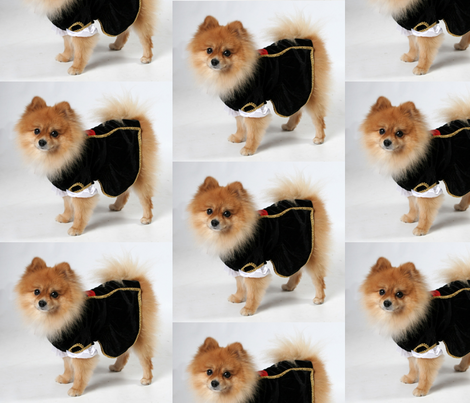 For Pomeranian Lovers fabric by thegiltreys on Spoonflower - custom fabric