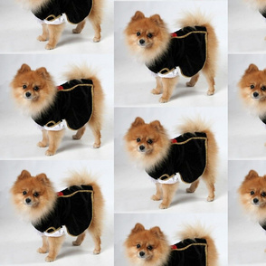 For Pomeranian Lovers