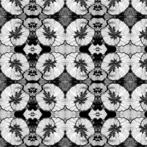 Black and White Begonias 5602-2