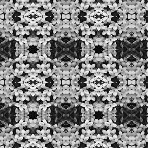 Black and White Dogwood 5175
