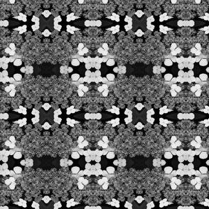 Black and White Hydrangea 5822