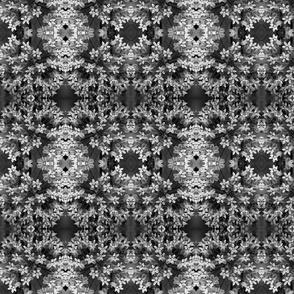 Black and White Milkweed Blossoms 5870