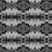 Black and White Astilbe 5749