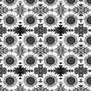 Black and White Sunflower 2599