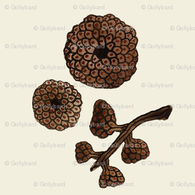 giant acorn caps natural