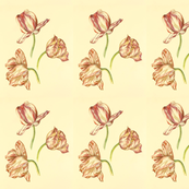 Tulips: Three Graces