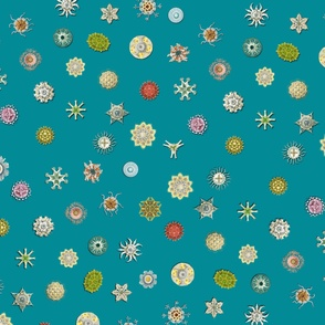 diatom_dot_copen_blue